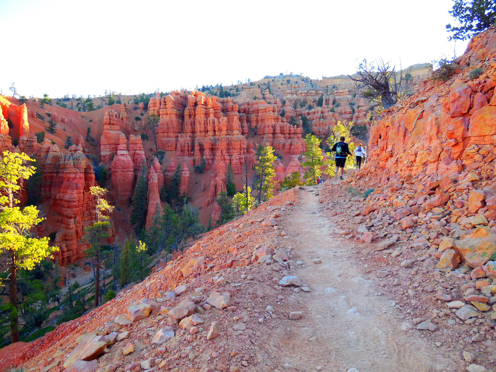Bryce Canyon Half Marathon Jul 10 2021 World S Marathons